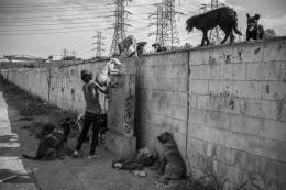 Moradora de rua cria vários cachorros, todos os dias ela repete a mesma ação de descer e subir os cãos onde se abriga.