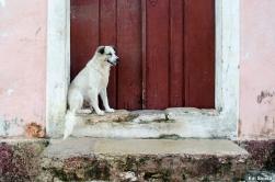 Cachorro na porta